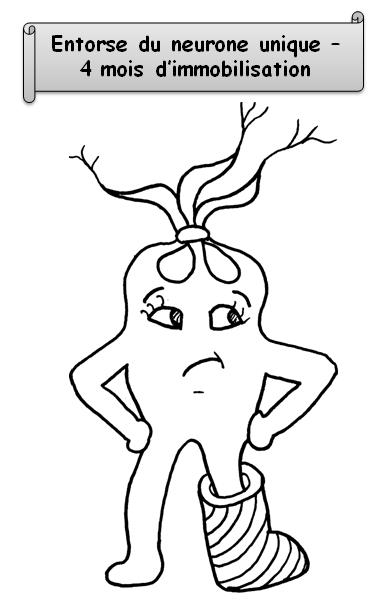 neurone avec legende